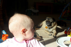 Baby girl with her pet dog. Sweet baby girl looking at her pet Pug in the sun Royalty Free Stock Images
