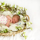 Baby girl inside of basket with spring flowers. Stock Photo