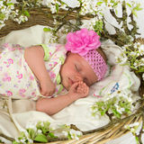 Baby girl inside of basket with spring flowers. Stock Photos