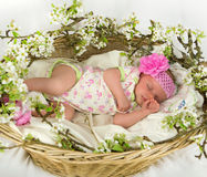 Baby girl inside of basket with spring flowers. Royalty Free Stock Photos