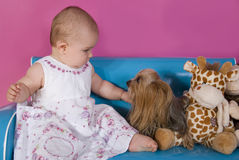 Baby girl and little yorkshire terrier. Seven months old baby girl with small yorkshire terrier dog on a blue couch Royalty Free Stock Photos