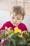 Baby girl looking at yellow flowers Royalty Free Stock Images