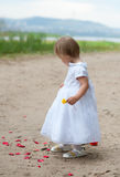 Baby girl looks and rose petals Royalty Free Stock Images