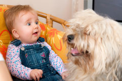 Baby girl with pet dog. Cute baby girl with long haired pet dog Royalty Free Stock Image