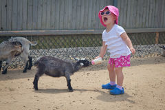 Baby girl at petting zoo Stock Images