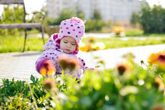 Baby girl picking flowers Stock Photography