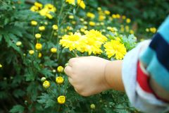 Baby girl picking a yellow flower by left hand royalty free stock photo