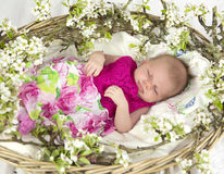 Baby girl in pink inside of basket with spring flowers. Royalty Free Stock Photos