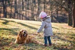 Baby girl playing with golden retriever dog Stock Photos