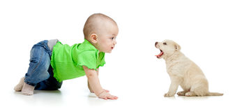 Baby girl playing with puppy dog. Studio shot stock images
