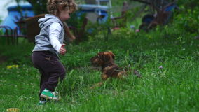 Baby Girl Playing With Puppy Dog stock video footage