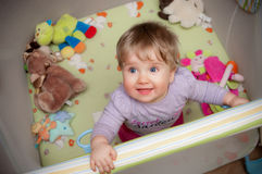 Baby girl in playpen. High angle view of cute baby girl in playpen with teddy bears Royalty Free Stock Photography