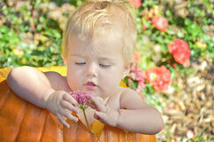 Baby girl in pumpkin Royalty Free Stock Photography