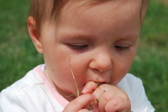 Baby girl. Seven-month baby girl tries to eat the dry grass stock image