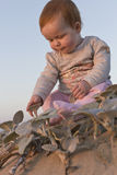 Baby girl sitting on the beach touching plants Stock Photo