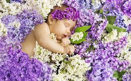 Baby Girl Sleep in Lilac Flowers, Sleeping Newborn Child stock images