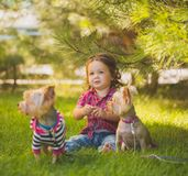 Baby girl and two yorkshire terrier Stock Photo