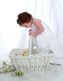 Baby Girl in Wicker Basket. Baby girl standing in  wicker basket in front of white background with flowers on floor Royalty Free Stock Images