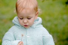 Baby glowing into dandelion. A pretty child glowing into dandelion outdoors royalty free stock photos
