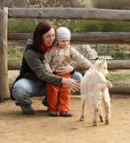 Baby and goat. Mother helping her child get over the fear of the goat and stroke it Stock Photography