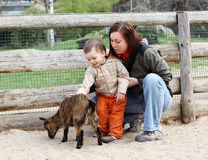 Baby and goat. Mother helping her child get over the fear of the goat and stroke it Stock Photos