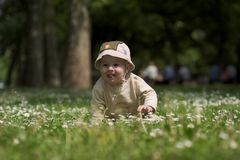 Baby on the green field 3. A baby is sitting on a flowery meadow, experiencing the surrounding nature by touching the flowers and harvesting the grass. This is Royalty Free Stock Photo