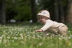 Baby on the green field 4. A baby is sitting on a flowery meadow, experiencing the surrounding nature by touching the flowers and harvesting the grass. This is Royalty Free Stock Photos