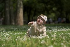 Baby on the green field 5. A baby is sitting on a flowery meadow, experiencing the surrounding nature by touching the flowers and harvesting the grass. This is Royalty Free Stock Images