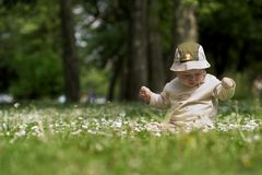 Baby on the green field 6. A baby is sitting on a flowery meadow, experiencing the surrounding nature by touching the flowers and harvesting the grass. This is Stock Image