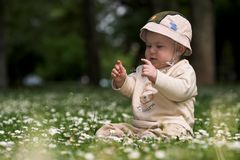 Baby on the green field 7. A baby is sitting on a flowery meadow, experiencing the surrounding nature by touching the flowers and harvesting the grass. This is Stock Photos