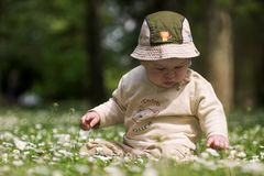 Baby on the green field 9. A baby is sitting on a flowery meadow, experiencing the surrounding nature by touching the flowers and harvesting the grass. This is Royalty Free Stock Images