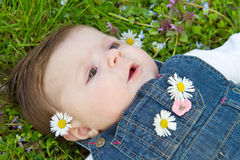 Baby on green grass with daisy Stock Image