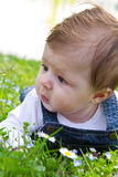 Baby on green grass with daisy Stock Photo