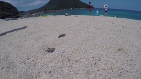 Baby green sea turtles cross sand to ocean, Yakushima, Japan. Baby green sea turtles cross sand to safety of the sea in tropical japan stock video footage