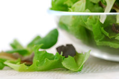 Baby greens Royalty Free Stock Photo