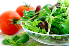 Baby greens and tomatoes Royalty Free Stock Photo