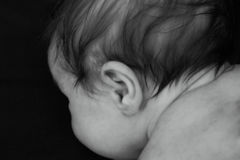 Baby Hair. Photo of the back of a baby's head stock photos