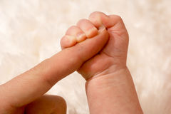 Baby hand. Grasping the finger of the mother Stock Photo