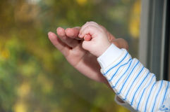 Baby hand in hand the mother stock photo