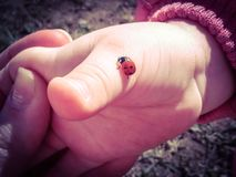 Baby hand and ladybug creeping up. Beautiful ladybug beetle crawling up and carrying good news on the gentle child`s hand that lies in the hand of mother royalty free stock photography