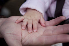 Baby hand in parent's hand. Stock Photo