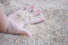 Baby hand plays sand. Baby hand is playing sand at the sea stock photography