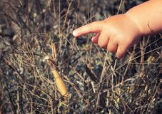 Baby hand points to a praying mantis. Exploring nature in stepple: child`s hand points to a praying mantis Royalty Free Stock Photos
