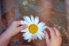 Baby hands with Chamomile flower on the water surface Royalty Free Stock Photography