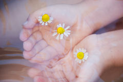 Baby hands with Chamomile flower on the water surface. Baby hands with Chamomile flower on the water royalty free stock photo