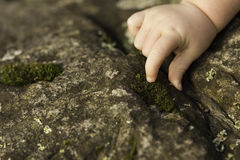 Baby hands exploring moss on rock Royalty Free Stock Image