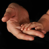 Baby hands with fathers Royalty Free Stock Photo