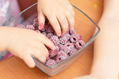 Baby hands taking frozen raspberries Royalty Free Stock Photography