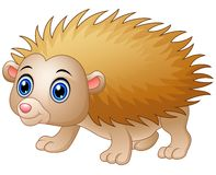 Baby hedgehog cartoon  white background. Illustration of Baby hedgehog cartoon  white background Royalty Free Stock Photo