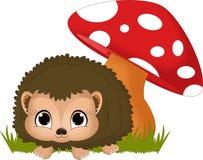 Baby Hedgehog Stock Photo